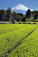 green tea medical benefits