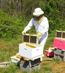 bee make honey