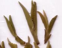 green tea information