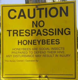 honey bee facts