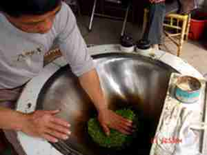 green tea processing