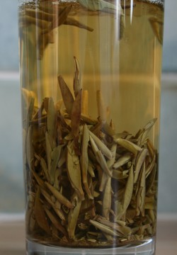 white tea varieties