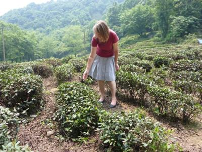 Val inspecting tea bushes at Longjing