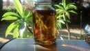 A Wonderful Sun Tea